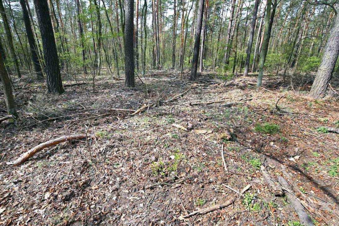 So ausgetrocknet wie dieser Boden in e..., sind auch die Wälder in der Ortenau.    Foto: Wolfgang Kumm (dpa)