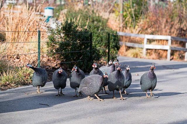 Tiere unter sich – im Basler Zoo und im Tierpark Lange Erlen
