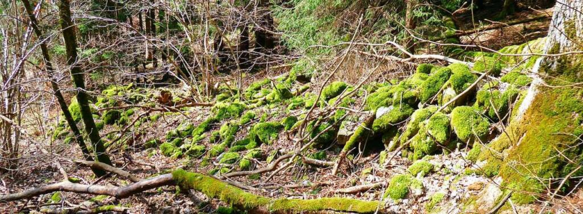 Stumme Zeitzeugen aus Stein: Eine der ...uern im Wald östlich von Elbenschwand.  | Foto: privat