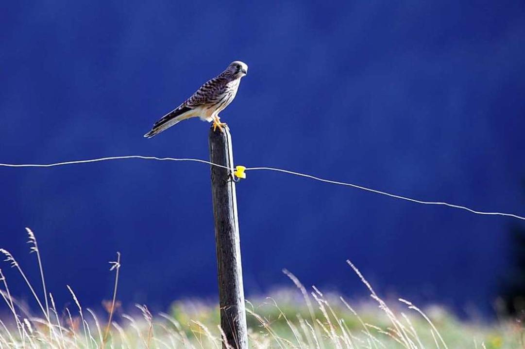 Auszeit in der Natur.  | Foto: Anand Aliprandi