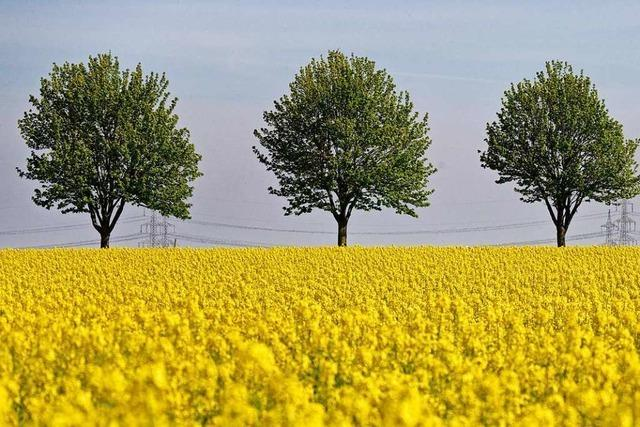 Experten aus Eichstetten stellen Modell für biologische Landwirtschaft vor