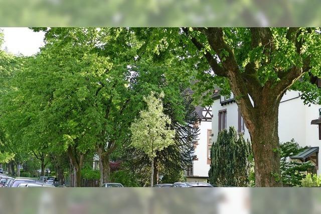 Stadtbäume im Dauerstress
