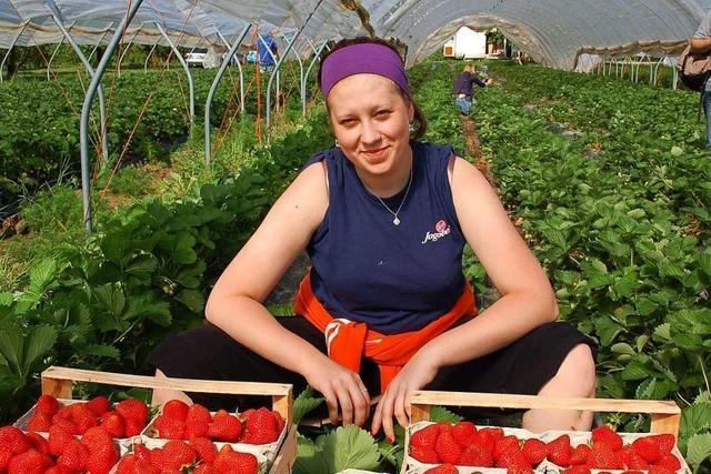 Der Obstgroßmarkt Oberkirch hat plötzlich zu viele Erntehelfer