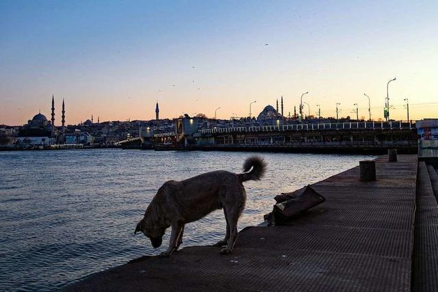 Warum leben manche Hunde auf der Straße?