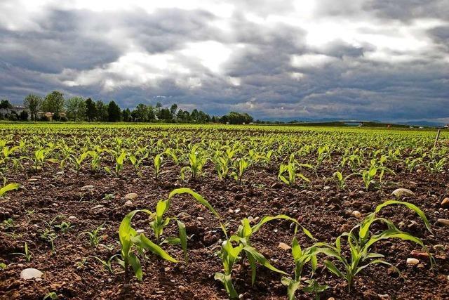 Dürre im Frühjahr: Die Lage ist dramatisch