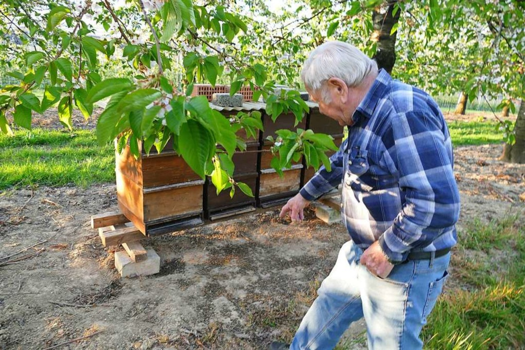 Jürgen Thüring ist einer der Imker, die  das Sterben ihrer Bienen bemerkt haben.  | Foto: Victoria Langelott