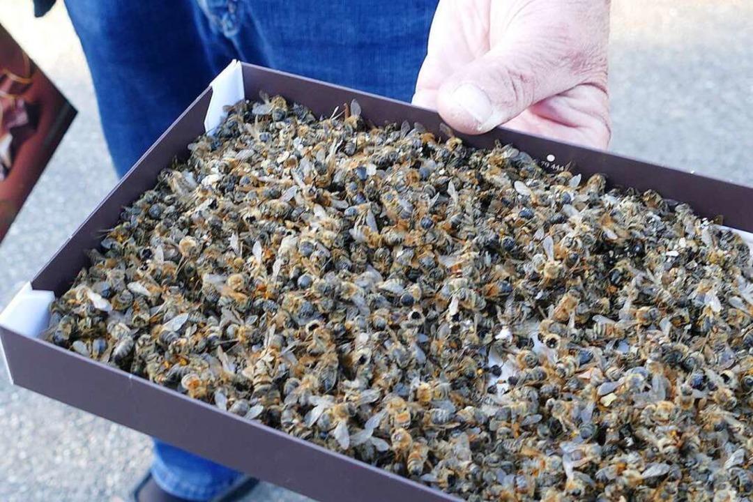 Viele Kisten füllten sich mit toten Bienen.  | Foto: Victoria Langelott