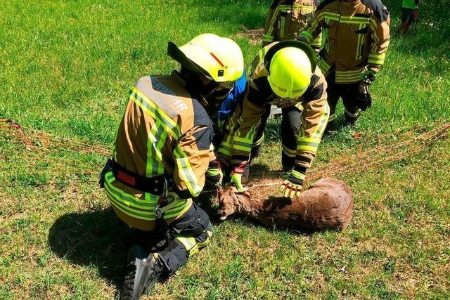 Emmendinger Feuerwehr befreit Reh aus Weidezaun