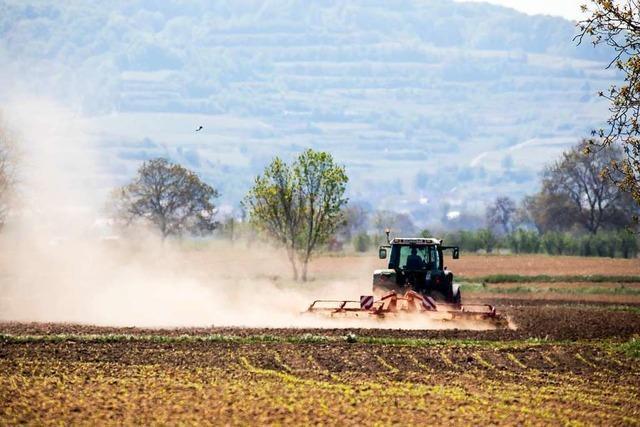 Der ausbleibende Regen lässt die Angst vor Ernteausfällen immer größer werden