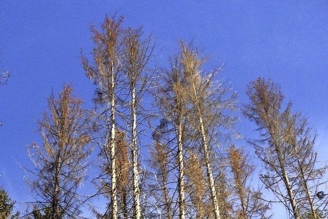 Der Hotzenwald wird mediterraner – um der Trockenheit zu trotzen