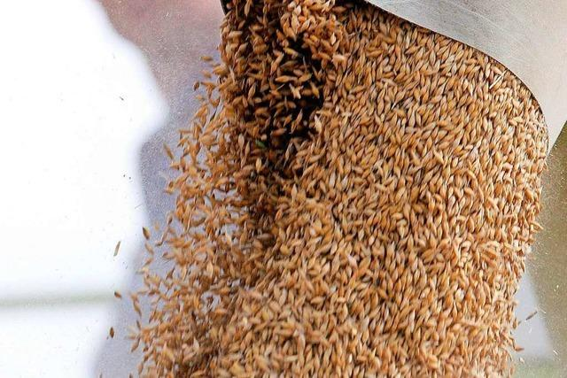Russland stoppt Getreideexport – Furcht vor Preisexplosion
