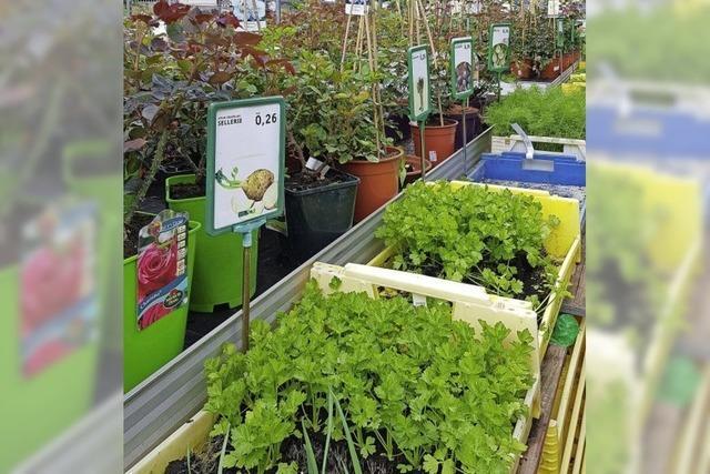 Mehr Nachfrage nach Samen und Setzlingen