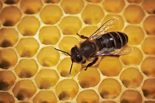 Unbekannte stehlen ein Bienenvolk bei Neuenburg-Grißheim