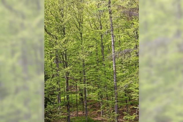Neuer Förster für den Schaffhauser Wald