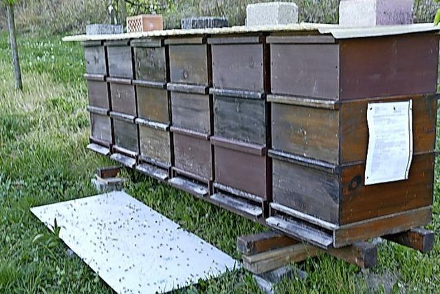 Bienenvölker erholen sich