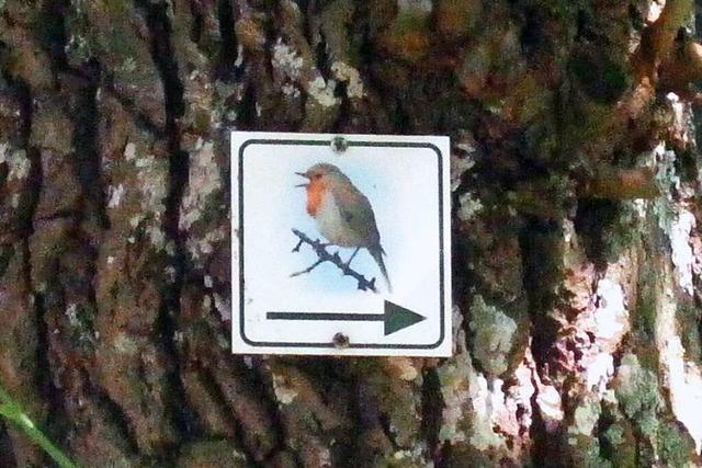 Auf dem Vogellehrpfad im Hexental weist das Rotkehlchen den Weg