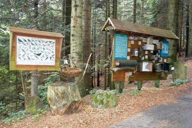Naturlehrpfad in St. Peter bietet Infos rund um das Thema Wald
