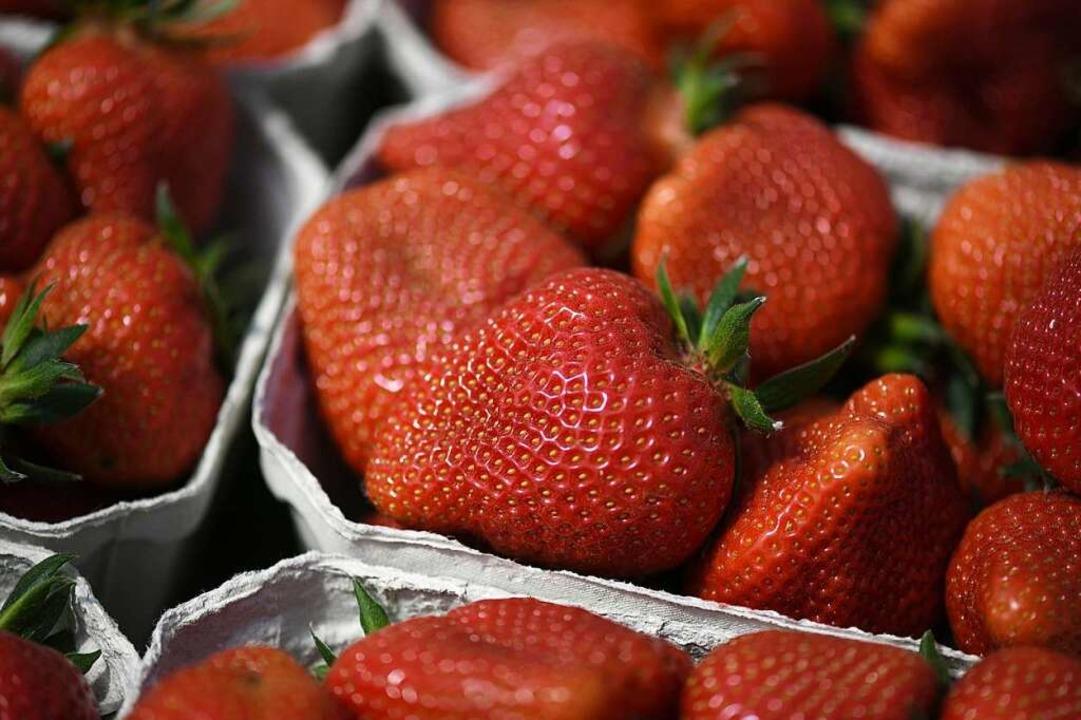 Endlich Erdbeeren!    Foto: Patrick Seeger (dpa)
