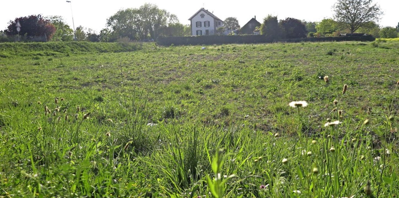 Die Fläche an der Mülhauser Straße, au...das Gelände der Landesgartenschau an.     Foto: Dorothee Philipp