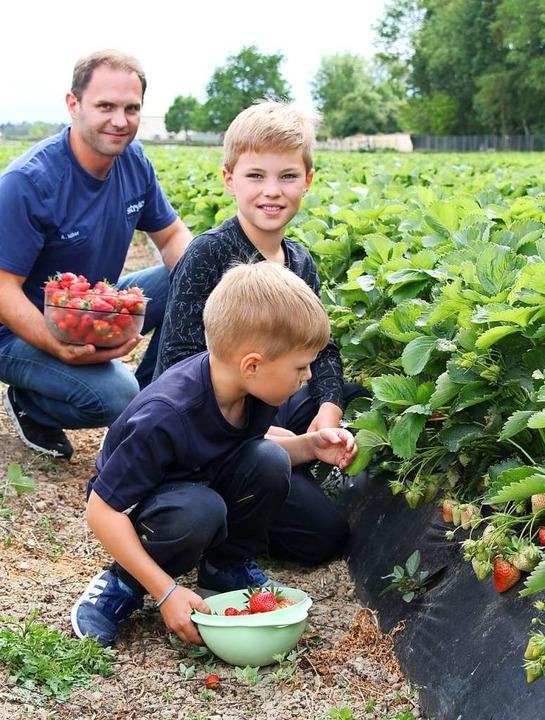 Teilen ihr Erdbeerfeld mit der Verwand...t seinen Söhnen Luca (Mitte) und Luis.  | Foto: Christine Speckner