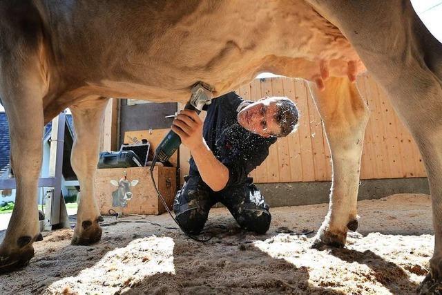 Kuhstylist Tobias Guggemos macht Rinder hübsch