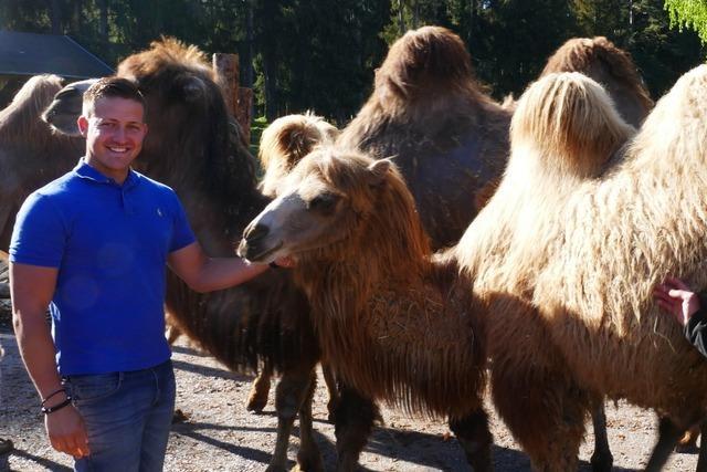 Sieben Kamele für Löffingen – wo die Tiere wieder besucht werden dürfen