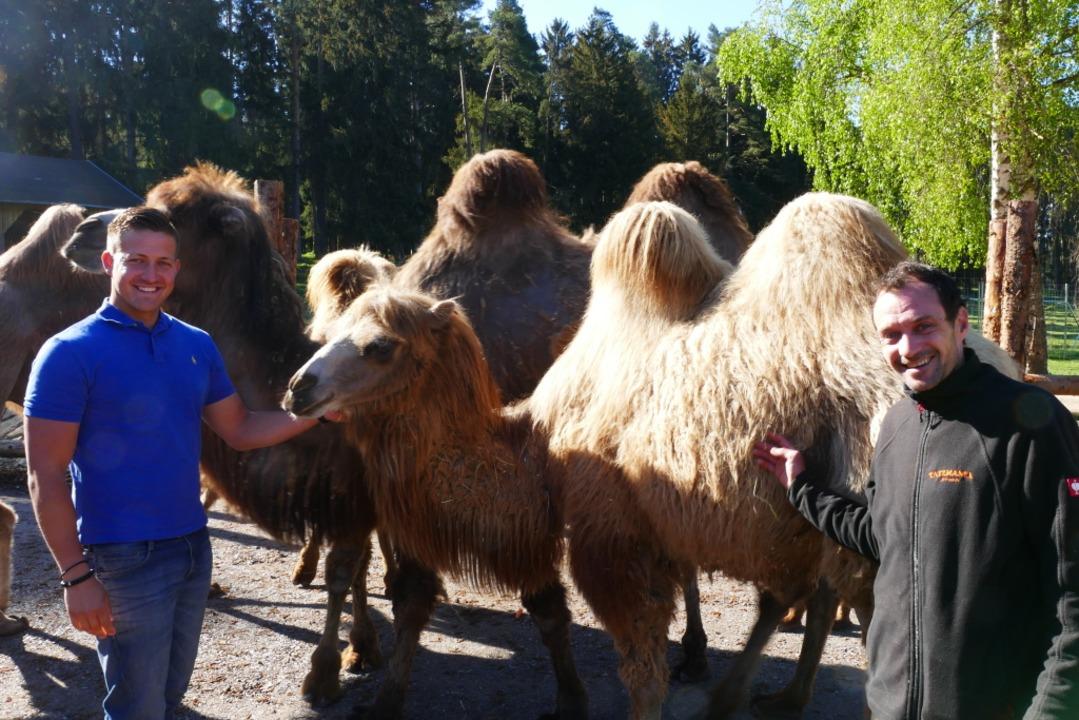Betriebsleiter Patrick Hassler (links)...nmitten der sieben neugierigen Kamele.  | Foto: Martin Wunderle