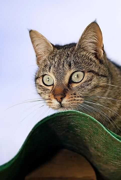 Katze mit Überblick  | Foto: ramonespelt - stock.adobe.com