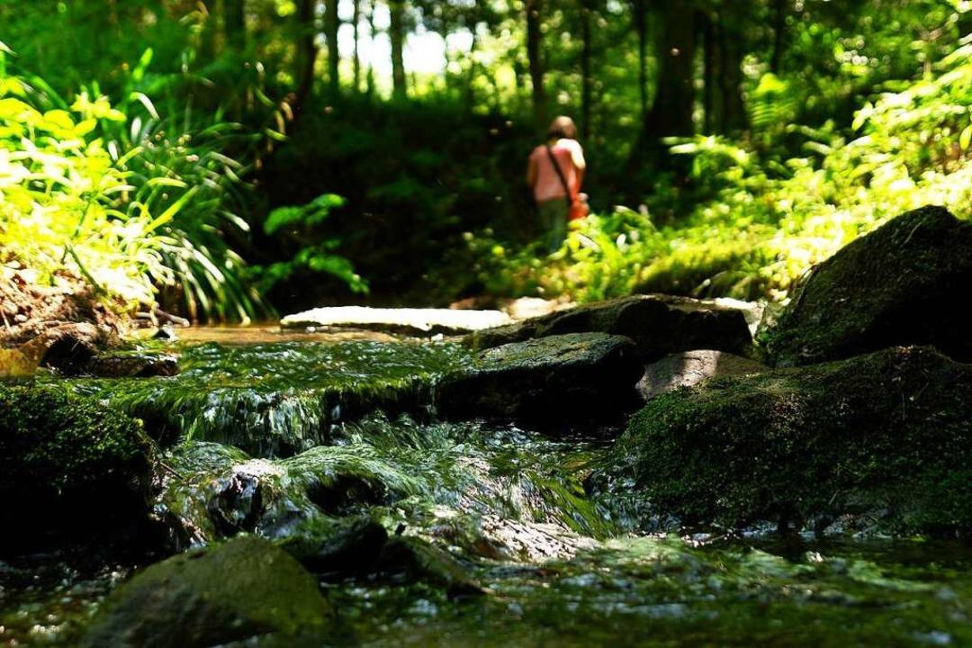 Der Wasserpfad in Sulz ist wieder offen.  | Foto: BZ