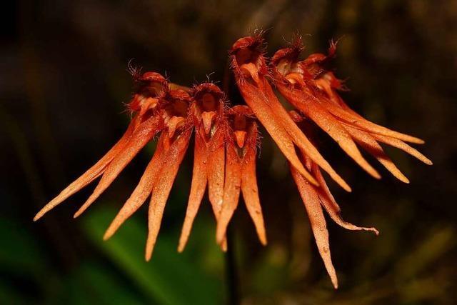 Die grüne Arche Noah: Hier wachsen 35.000 Pflanzen aus aller Welt