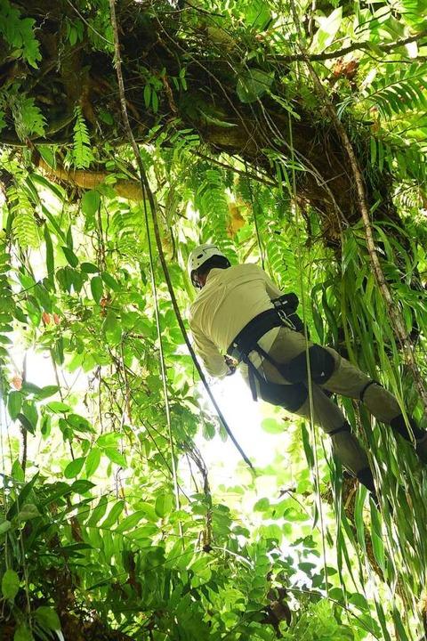 Die Baumkletterer sind im Auftrag des ...uftigen Höhen von Urwäldern unterwegs.  | Foto: KBBC