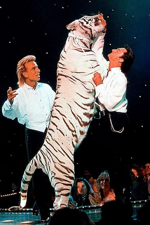 Auftritt mit weißem Tiger: Siegfried u...egas auf dem Höhepunkt ihrer Karriere.    Foto: Fotoreport (dpa)