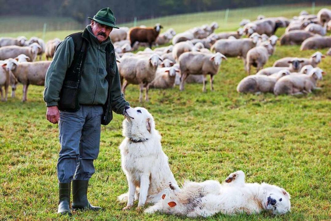 Auch Herdenschutzhunde (hier bei Schwä...d als Schutz vor dem Wolf im Gespräch.  | Foto: Christoph Schmidt