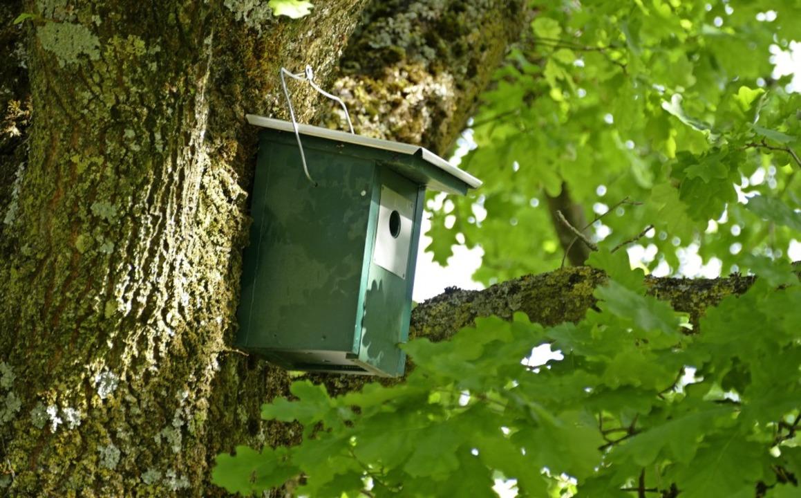 Die Gemeinde Gutach hat 15 Nistkästen,...n, vorzugsweise in Eichen aufgehängt.   | Foto: Sylvia Sredniawa