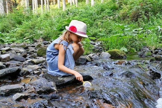 Auf dem Ameisenpfad in Rötenbach gibt's das große Krabbeln für die Kleinen