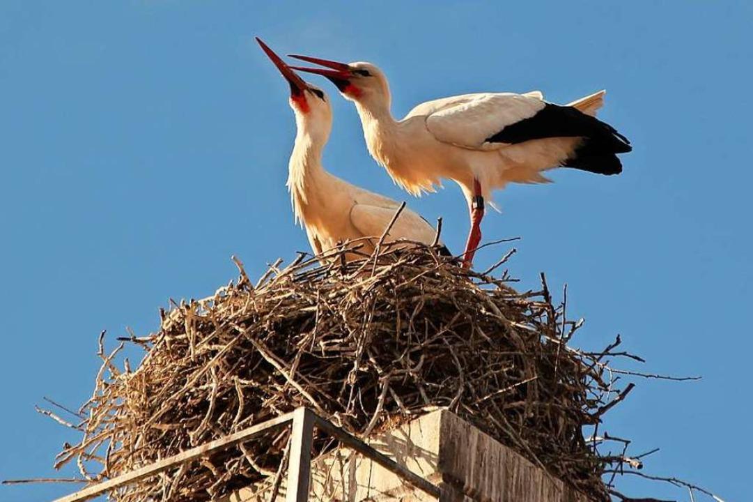 Auf einem ausgedienten Kamin in Merdin...en neuen Storchenmann ein Nest gebaut.  | Foto: Mario Schöneberg