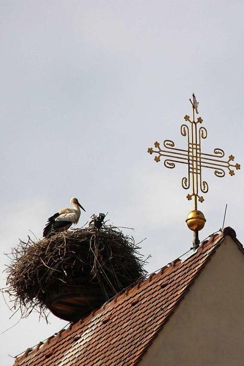 Auch das Storchennest auf dem Turmdach...schen Kirche in Bötzingen ist bewohnt.  | Foto: Horst David