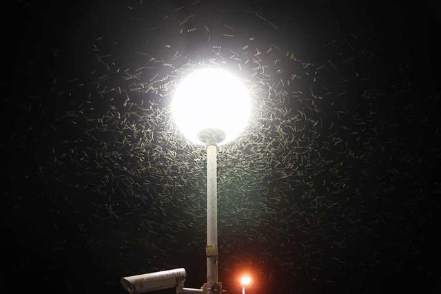 Leuchtende Todesfallen für Insekten: Land kämpft gegen Lichtverschmutzung