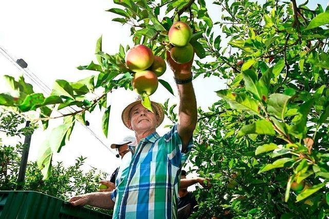 Fast ein Drittel der deutschen Obstproduktion kommt aus dem Südwesten