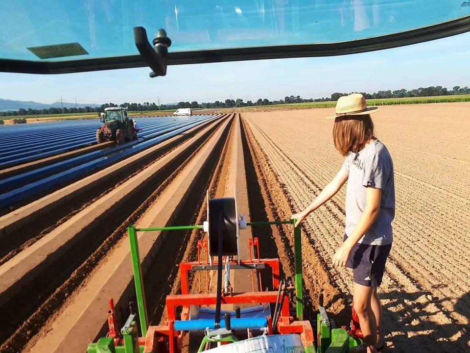 Wie mit dem Lineal gezogen – Furchen auf einem Erdbeerfeld  | Foto: Dieter Maier