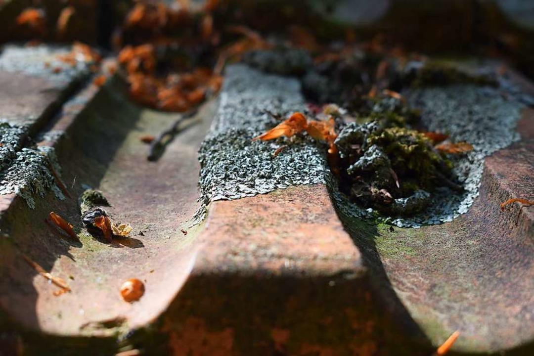Dass auch menschengemachte Oberflächen...ch eines Schuppens niedergelassen hat.  | Foto: Yannick Allgeier