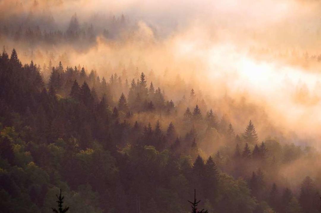 Strotzend vor Kraft: der nachgewittrig...gmischwald im Hochschwarzwald im Mai.     Foto: Hubertus Ulsamer