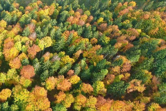 Jetzt wird's bunt im Wald im Dreisamtal