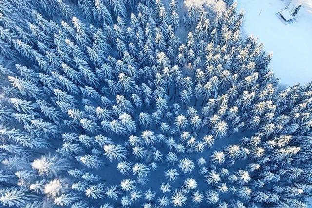 Schneebestäubte Tannen auf dem Schauinsland von oben
