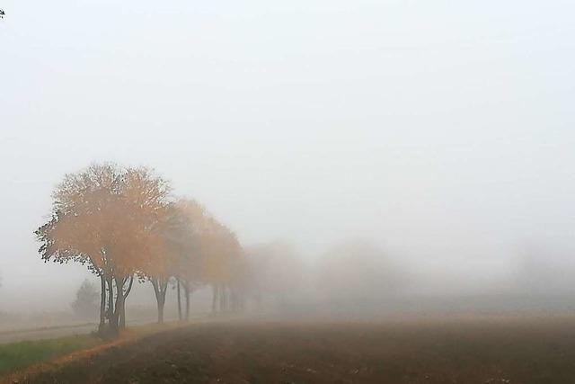 Nebel am Tuniberg zwischen Tiengen und Munzingen