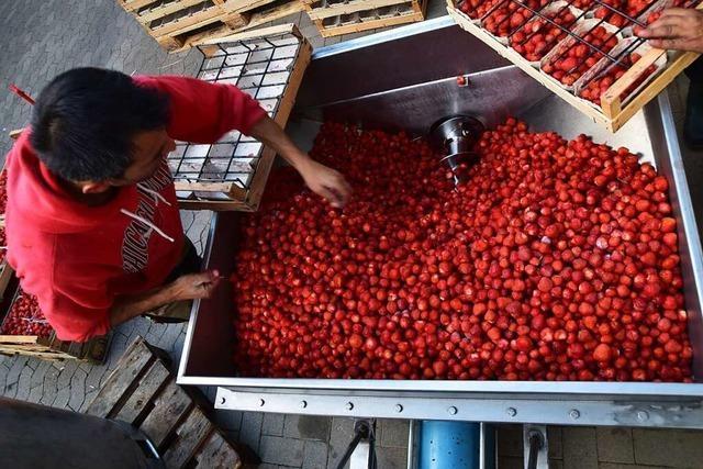 Früchte in der Flasche: Prickelnder Secco aus Erdbeeren