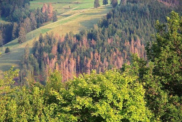 Forstminister fordert noch mehr Hilfe für den Wald im Südwesten
