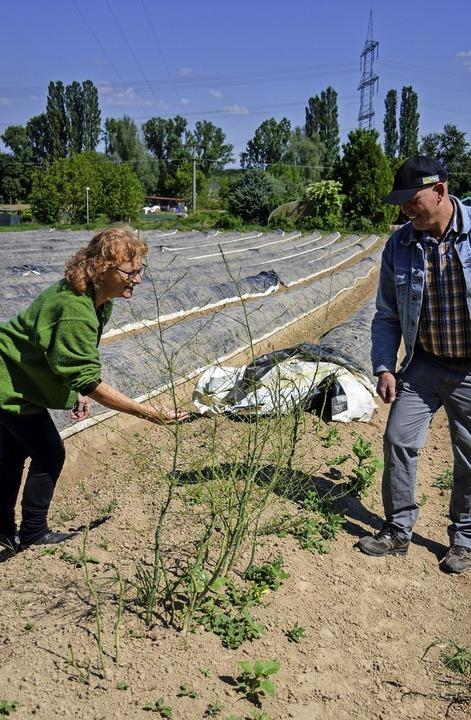 Carola Holweg und Landwirt Dieter Dürrmeier auf dem Spargelfeld  | Foto: Gabriele Hennicke