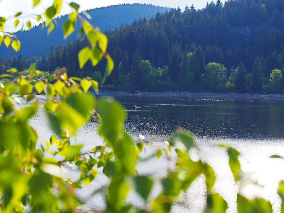 Hat der Wald Augen?    Foto: Susanne Gilg