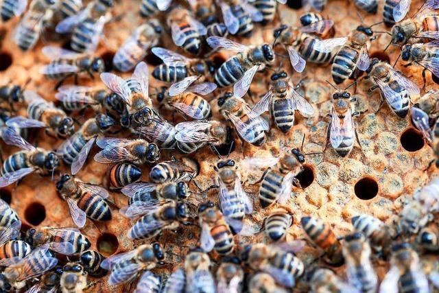 Unbekannte stehlen in der Region mehrere Bienenstöcke